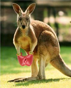 Boxing Kangaroo2